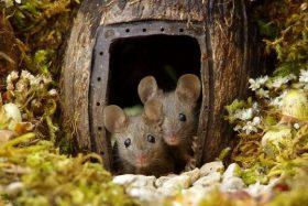 [FOTOS] Este hombre construyó una aldea a los ratones que consiguió en su jardín, conozca la historia