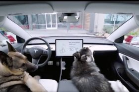 Modo perro Tesla