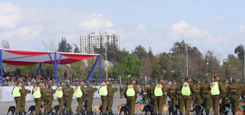 cachorros parada militar